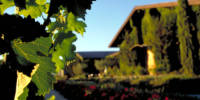 ow_winery